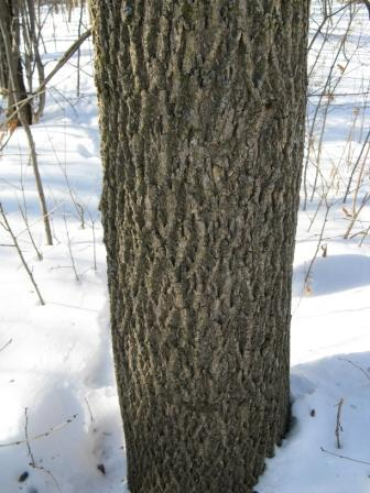 Emerald Ash Borer Resource Guide Agriculture Trade And