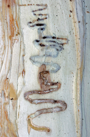 Emerald Ash Borer Resource Guide Agriculture Trade And Consumer Protection